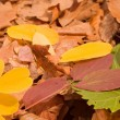 fall leaves — Stock Photo #2338011