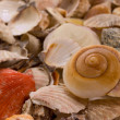 Seashells — Foto Stock