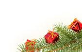 Christmas branch — Stock Photo