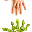 Green hand — Stock Photo