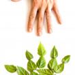 Green hand — Stock Photo