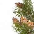 Royalty-Free Stock Photo: Christmas branch