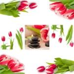 Spring zen like SPA — Stock Photo