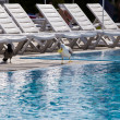 Seagull near by empty pool solar mornin - Stock Photo