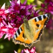 Stock Photo: Butterfly on crimson flowers
