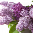 Stock Photo: Lilac bouquet