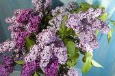 Bouquet de lilas — Photo