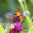 The bright butterfly — Stock Photo