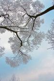 Schneebedeckte Zweige des Baumes am Himmel — Stockfoto