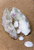 The exotic sea shell with a pearl beads — Stock Photo