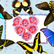 Royalty-Free Stock Photo: Valentines card-Butterfly and Rose