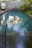 White orchid on background of pool — Stock Photo