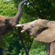 Stock Photo: Elephant talk