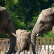 Elephant talk — Stockfoto
