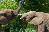Elephant talk — Stock Photo