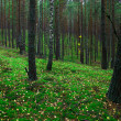 Green forest — Stock Photo #1791414