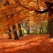 Stock Photo: Fall in Park