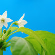 White flower — Foto Stock #1789553
