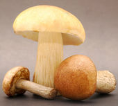 Three mushrooms — Stock Photo