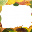 Royalty-Free Stock Photo: Frame from leaves