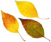 Leaves — Foto Stock