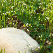 Grass — Stock Photo #2174576
