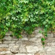Stone wall and plants - Stok fotoğraf