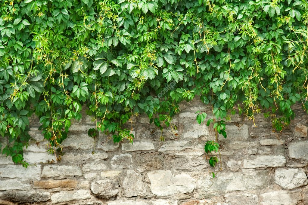 Stone wall and green plants — Photo #2189780