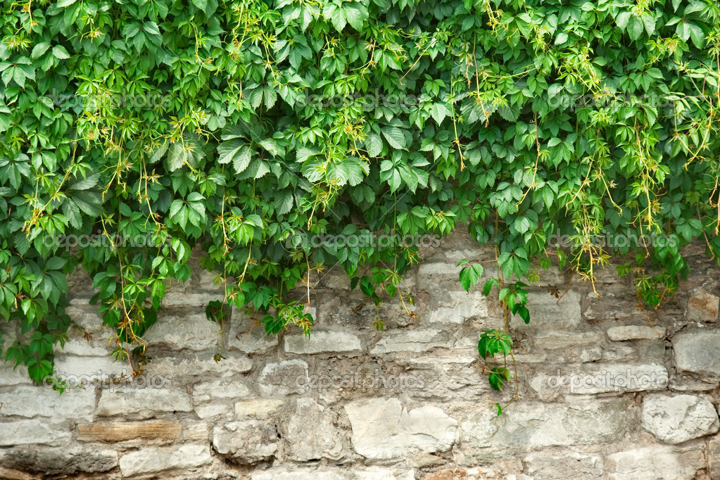 Stone wall and green plants  Stock Photo #2189780