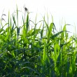 Logn grass — Stock Photo #2248802