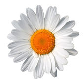 White flower — Stock Photo