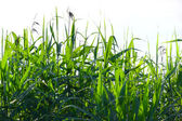 Logn grass — Stock Photo