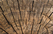 Old log texture — Stock Photo