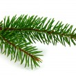 Royalty-Free Stock Photo: Pine branch