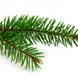 Pine branch — Stock Photo #2384354