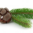 Fir branch — Stock Photo #2450120
