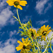 Yellow daisy against blue sky — Stock Photo