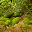 Stock Photo: Deep forest in Brittany, France