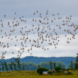 Flock of birds flying — Stock Photo
