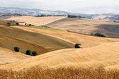 Beautiful Tuscany landscape in summer — Stock Photo