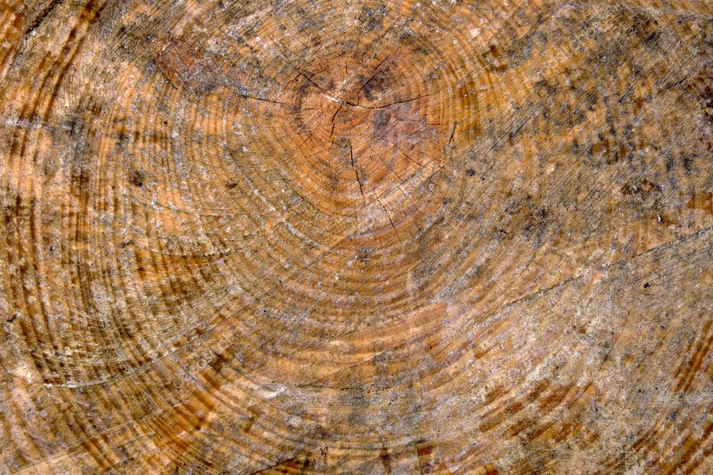 Close up of wooden trunk section as background texture — Stock Photo #1808002