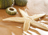 Starfish and echinus — Stock Photo