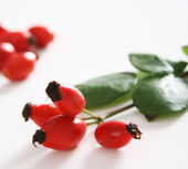 Red rose hip — Stock Photo