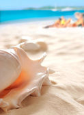 Shell on the beach — Stock Photo