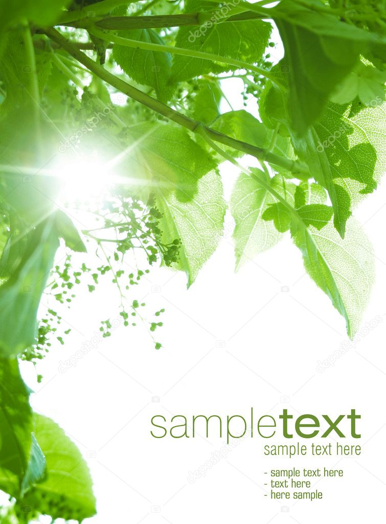 Sun beams shining thru green leaves. Space for text isolated on solid color.  Foto de Stock   #1858857