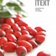 Red rose hip — Stock Photo #1873842