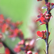 Red plant twig — Stock fotografie