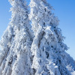 Winter - frozen tree — Stock Photo