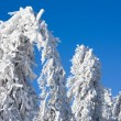 Winter - frozen tree - Stock Photo