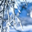 Frozen branch - ice — Stock Photo